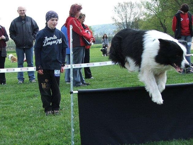 První závody v obedience - nejmladší závodník