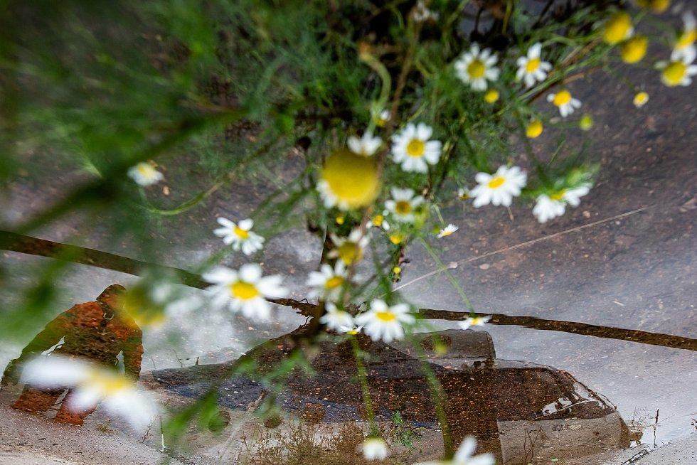 Vrtulník usazoval v pondělí odpoledne konstrukci rozhledny na vrch Žaltman v Jestřebích horách u Malých Svatoňovic.