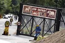 Lví safari ve Dvoře Králové