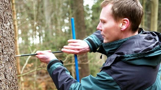 ODEBRÁNÍ VZORKŮ ZE SMRKU má pomoci vyloučit zejména skryté vady dřeva.