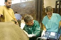 SAMICI NABIRE vyšetřovali reprodukční orgány veterináři v královédvorské zoo.