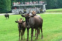 Safari Dvůr Králové