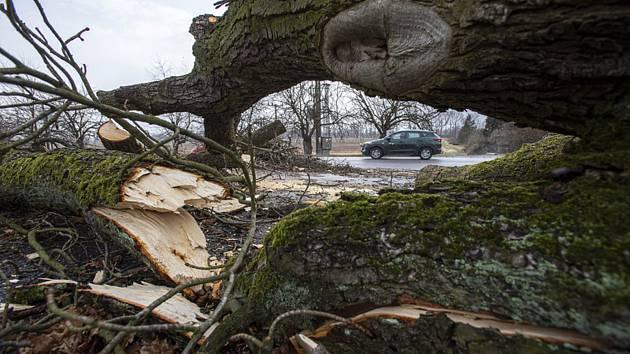 Strom spadlý na silnici kvůli silnému větru. Ilustrační fotografie.