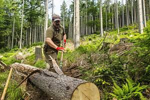 Loupání kůrovcového dřeva v Krkonoších. Zatímco v roce 2017 pracovníci Správy KRNAP pokáceli 5 tisíc kubíků kůrovcového dřeva, letos přes 41 tisíc.