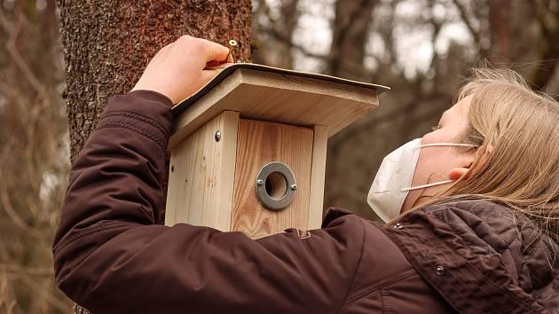 Studenti České lesnické akademie v Trutnově umístili v lese v osadě Bystřice u Mladých Buků ptačí budky.