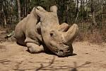 Zemřel nosorožec Sudán