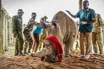 Bílým nosorožcům pomůže nový pivní speciál