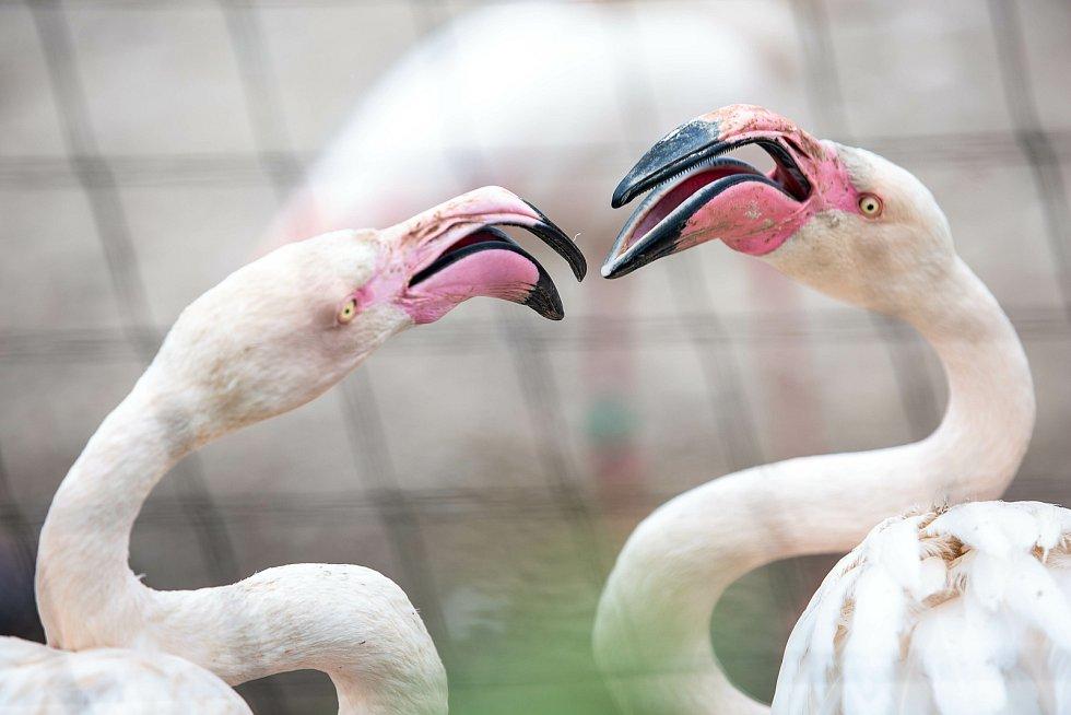 V Safari Parku Dvůr Králové žije dva tisíce zvířat.