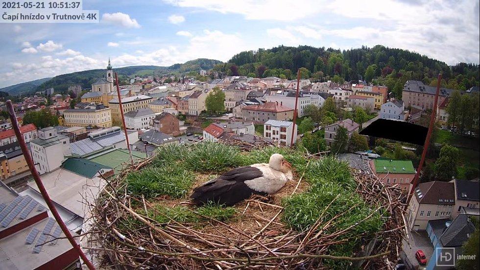 Čapí hnízdo na pivovarském komíně v Trutnově.