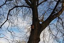 Přibývá budek pro úkryt a hnízdění ptáků.