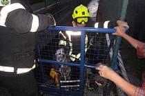 Pes spadl do řeky a málem se utopil v náhonu. Vytáhli ho hasiči.