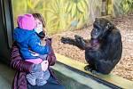 Safari Park Dvůr Králové navštívilo v roce 2020 celkem 450722 lidí.