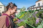 Od pátku do neděle se uskuteční Zahradnické trhy v Kuksu.