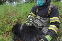 Hasiči ve Dvoře Králové nad Labem pomohli z řeky dvěma velkým psům.