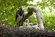 Krkonošský národní park existuje 55 let, byl vyhlášen 17. května 1963.