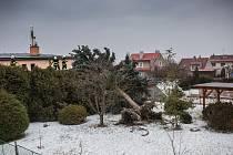 Větrná smršť v Novém Městě nad Metují v ulici  Na Františku spadl strom na garáž.