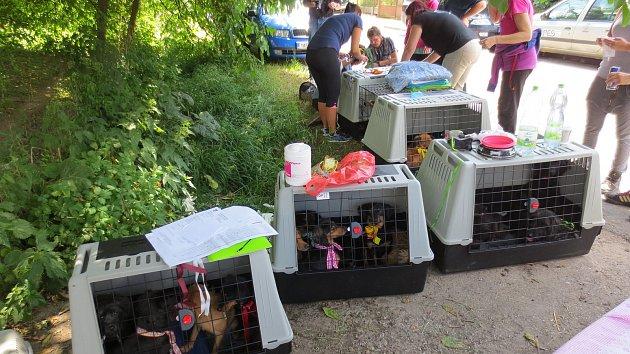 Veterináři vyhmátli týrané psy. Chovatelce jich odebrali třiapadesát.