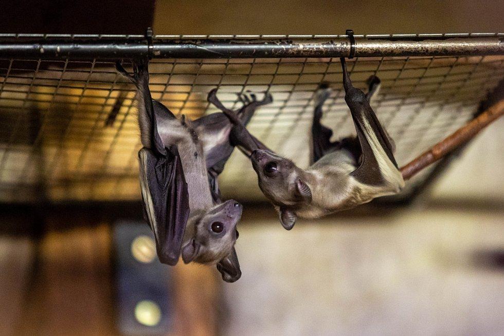 Zoo ve Dvoře Králové má nové přírustky