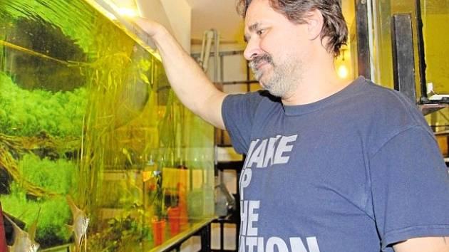 PAVEL DUŠEK kromě neonek červených chová také třeba skaláry, jedny z nejobdivovanějších akvarijních ryb.
