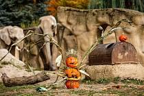 V Safari Parku Dvůr Králové začal oblíbený Týden duchů.