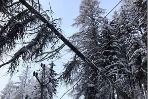 Energetiky zasypala lavina poruch kvůli stromům, které padaly na vedení vysokého napětí.