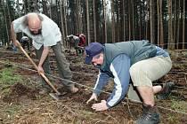 PŘES 1000 SAZENIC BUKŮ vysázeli v neděli v trutnovském lesoparku účastníci akce nazvané Ke kořenům! (na snímku zleva Jiří Kulich a Jan Balcar).