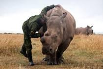 nosorožec dvourohý