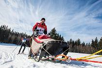 Musher Jiří Vondrák z Rudníku suverénně vyhrál společně s běžkařem Davidem Chaloupským tříetapový krkonošský závod Ledová jízda, který se jede na počest prvního českého pokořitele Antarktidy Václava Vojtěcha.