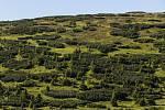 Porosty kleče na Studniční hoře v Krkonoších.
