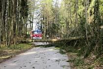 Hasiči odklízeli na několika místech v kraji popadané stromy
