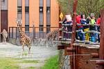 Safari Park Dvůr Králové je nejvyhledávanějším turistickým cílem Královéhradeckého kraje, loni ho navštívilo 450 722 lidí.