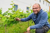 Petr Šmíd, velitel jednotky dobrovolných hasičů v Hostinném, založil vinohrad v zahradě Františkánského kláštera v Hostinném.