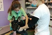 V ordinaci veterinární kliniky v Trutnově platí během vyšetření a zákroků přísná hygienická pravidla.