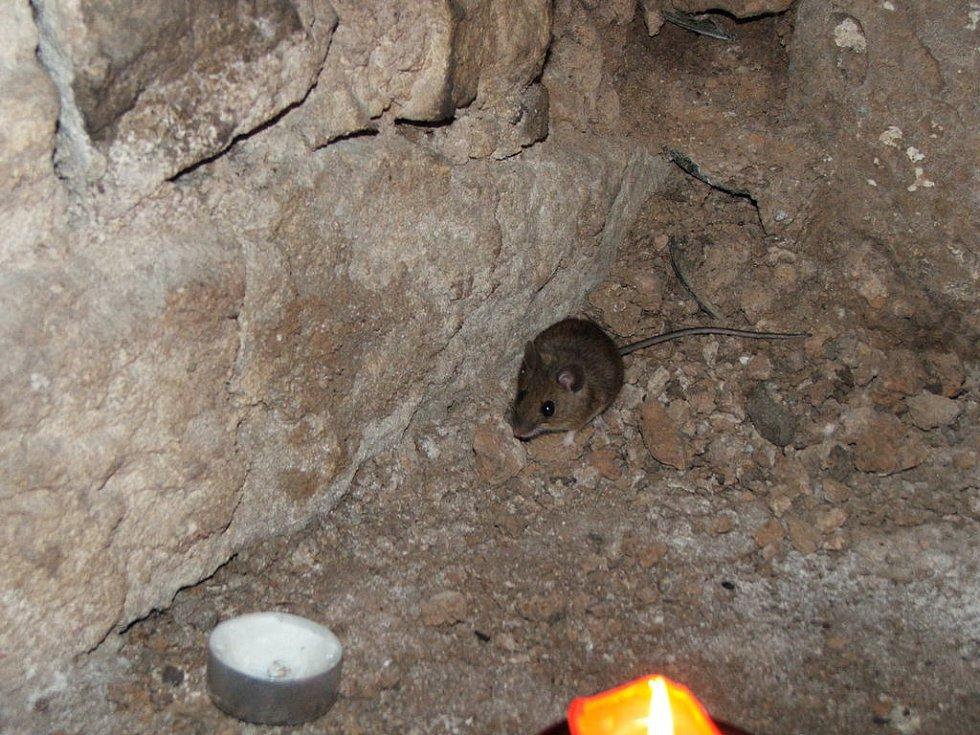 Na účastníky se přišla podívat i myška