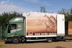 Dvorská zoo přivezla z Anglie pět nových zvířat.