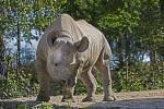 Safari Park Dvůr Králové se v sobotu 19. září připojí k oslavám Světového dne nosorožců.