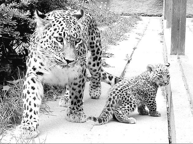 Zoo Dvůr