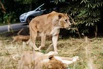 Zoo ve Dvoře Králové - safari.