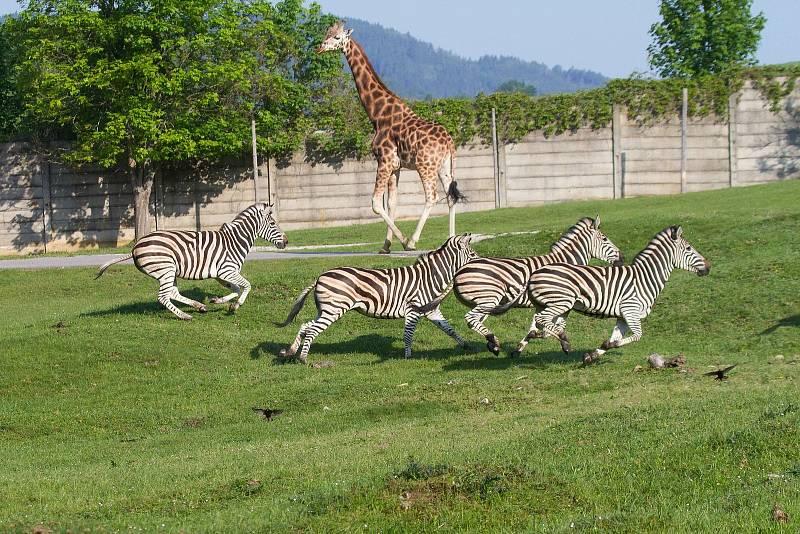 Africké safari Josefa Vágnera.