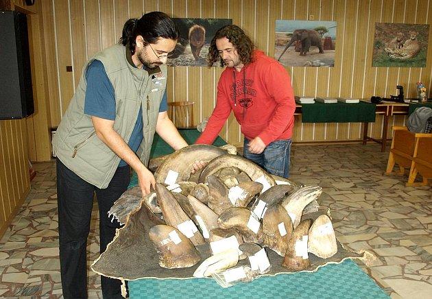 Ulomené a odřezané nosorožčí rohy v královédvorské zoo