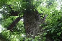 Díky stromům se můžeme nadechnout.