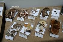 Výstava hub v Muzeu Podkrkonoší v Trutnově.