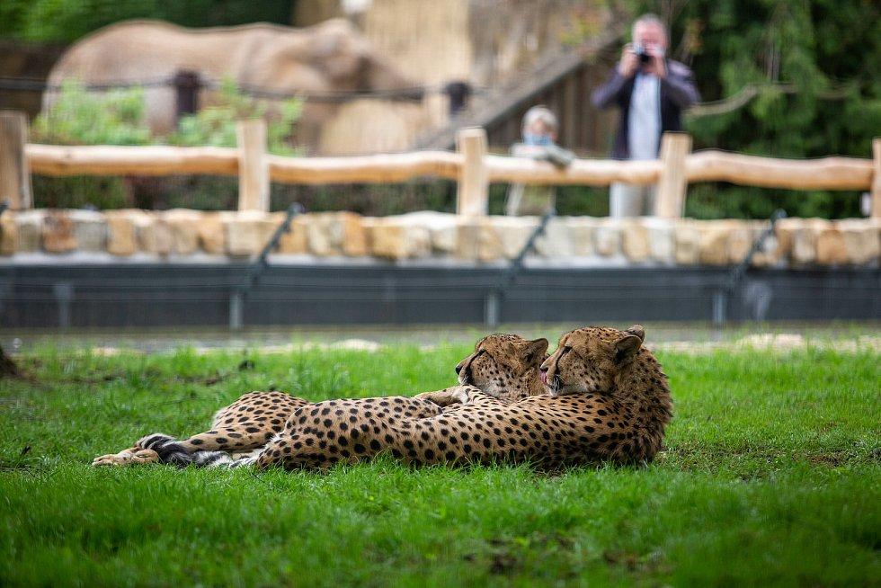 Safaripark Dvůr Králové nad Labem, Novinky v zoo. Zoo v sezoně láká hlavně na nový výběh pro gepardy a nové pavilony.