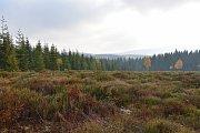 Krkonošský národní park připravuje na svém území jedenáct nových tokanišť pro tetřívka obecného.