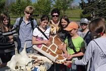 ŠKOLNÍ SKUPINY mají  v zoo návštěvu levnější.