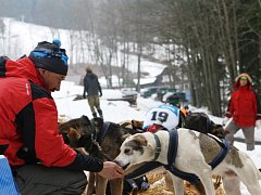 Odměna pro vítěznou posádku. Jiří Vondrák krmí svoje psy poté, co vyhráli třídenní krkonošskou Ledovou jízdu.