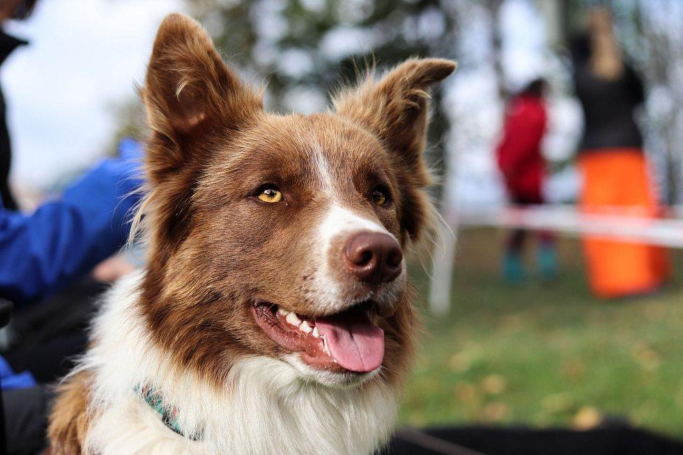 Třetí ročník závodů psí agility v Čisté v Krkonoších.