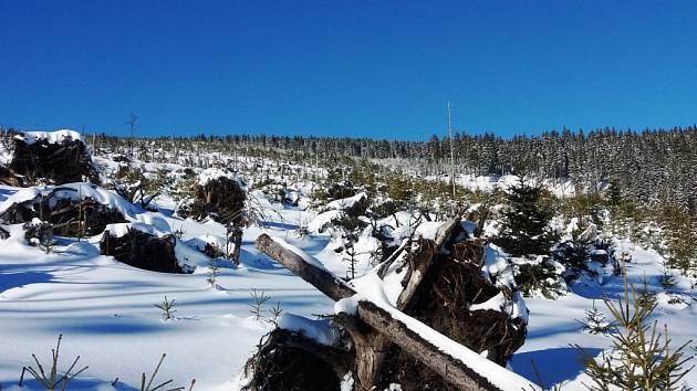Na sněžnicích po stopách ničivého orkánu Kyrill