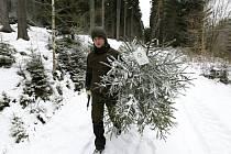 PRACOVNÍCI Správy KRNAP vyrazili pro stromky, které si lidé objednali.
