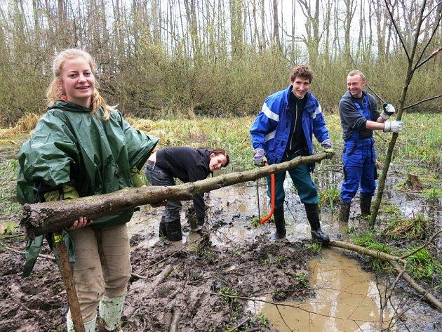 SILNOU VRSTVU BAHNA a náletové dřeviny likvidovali   dobrovolníci v tůni pro obojživelníky, kterou objevili v rezervaci Bažantník u Sedmihorek.